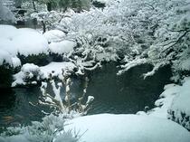 日本庭園(冬)