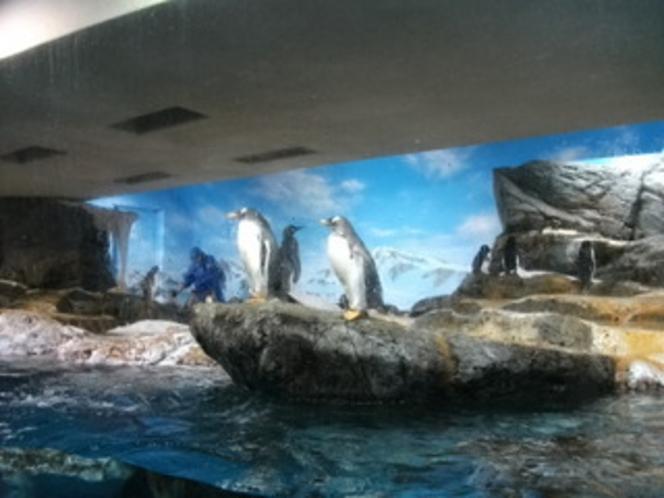 鴨川シーワルド ペンギン