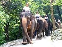 市川市 象の国(動物園)