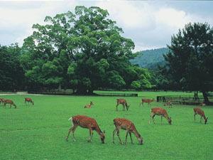 奈良公園【飛火野】