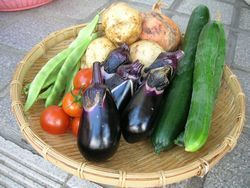 自家製 特選野菜