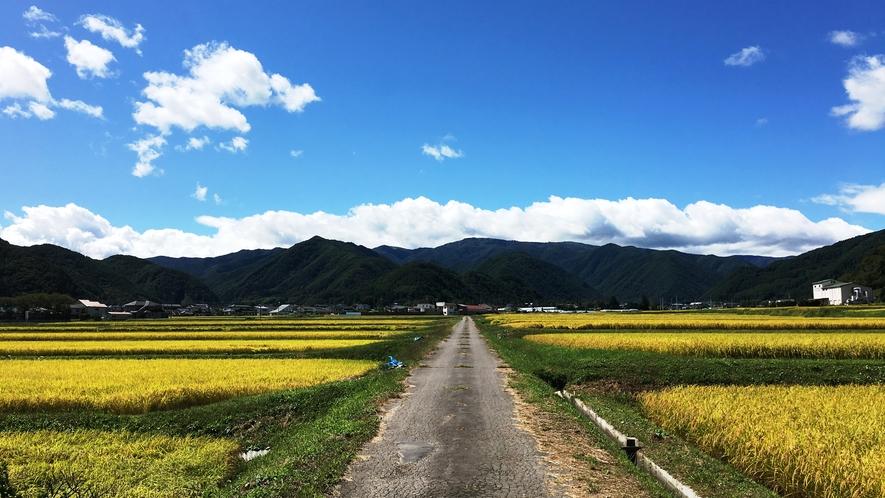◆【周辺】美ヶ原と田んぼ(秋)