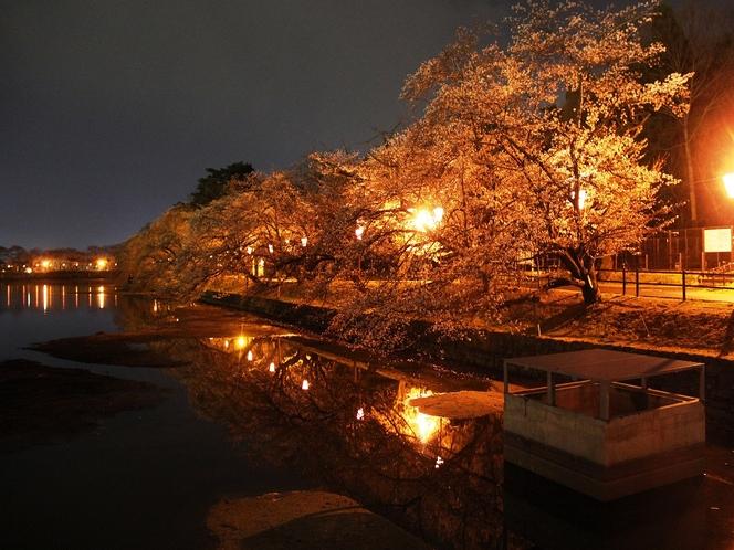 【春】五百淵公園 夜桜