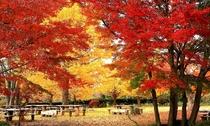 【秋】緑水苑