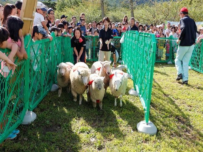 【観光】郡山石筵ふれあい牧場・・・乗馬施設をはじめ、バーベキューなど家族で楽しめます!