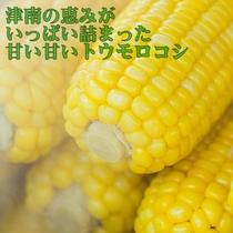 津南のトウモロコシは甘さがいっぱい★