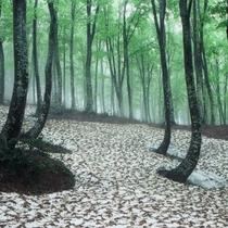 残雪の芽吹き