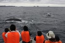 ビーナスクジラ2