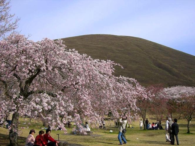 見事な桜をワンちゃんと散策できるさくらの里