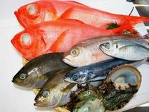 見てもきれい食べても美味しい伊東で水揚げされた魚たち