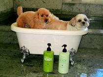 ワンちゃんも温泉浴毛もサラサラに