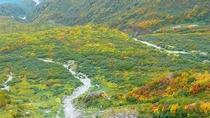 *周辺/紅葉の立山黒部アルペンルート。散策も楽しくなります。