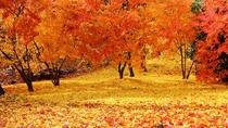 *秋/カラフルな落ち葉の絨毯が続きます。