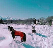雪上のドッグラン