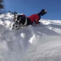 裏磐梯の冬、ワンちゃんと遊ぼう