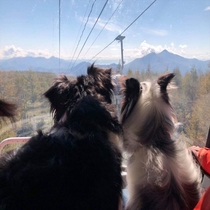 看板犬、グランデコでゴンドラに乗りました