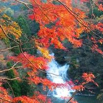 *粟又の滝(紅葉風景)