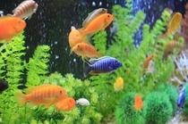 mg 魚1