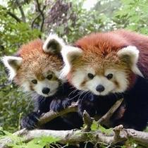 【観光】池田動物園