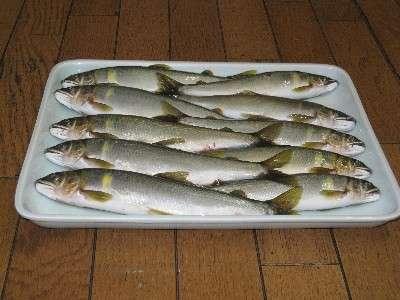 21 料理長が釣ってきた 馬瀬川の地鮎!