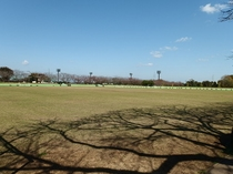 阿漕浦運動公園のグラウンド