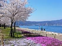 【春】なぎさ公園の春の桜