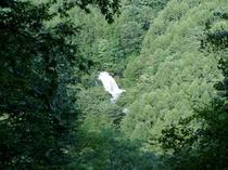 妖精の森からの千ヶ滝