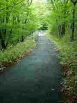 新緑のサイクリングロード