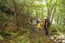 川俣渓谷自然道から