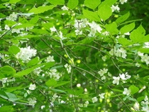 バークに咲く山の花