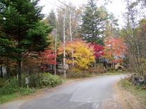 バーク秋の西道
