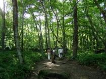 吐竜の滝へと続く森の道