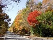 森の中のメイン道の紅葉