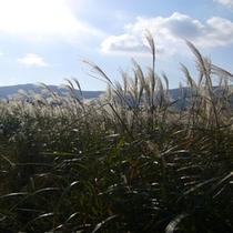 仙石原湿原①