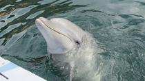 ★【じゃのひれドルフィンファーム】イルカと遊ぼう!(ホテルよりお車で約20分)