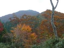 氷ノ山の紅葉