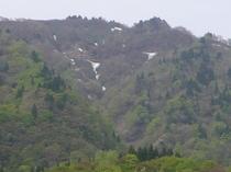 新緑の氷ノ山