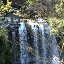 滝観庵から臨む桜滝