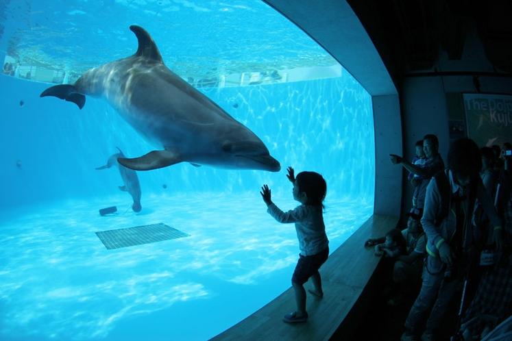 【海きらら】イルカの水槽
