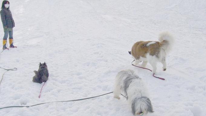 ★ペットも一緒に年越し★2名様でゆったり♪大型犬や多頭飼いの方にオススメな2食付連泊プラン