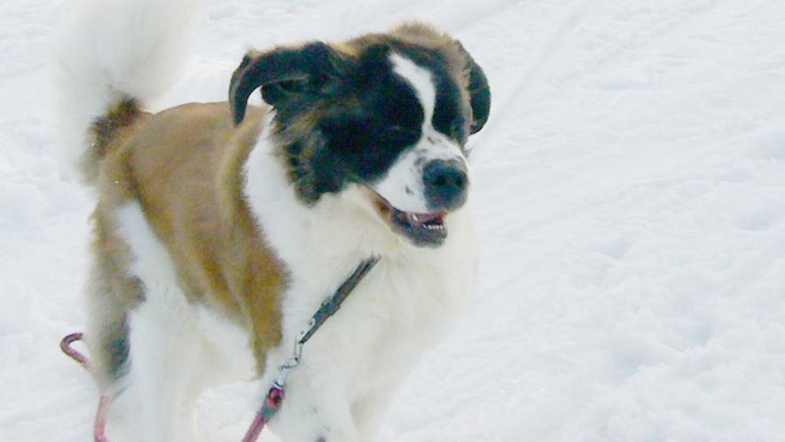 *雪の景色/大雪原の中、駆け回るワンちゃん!大喜びです。
