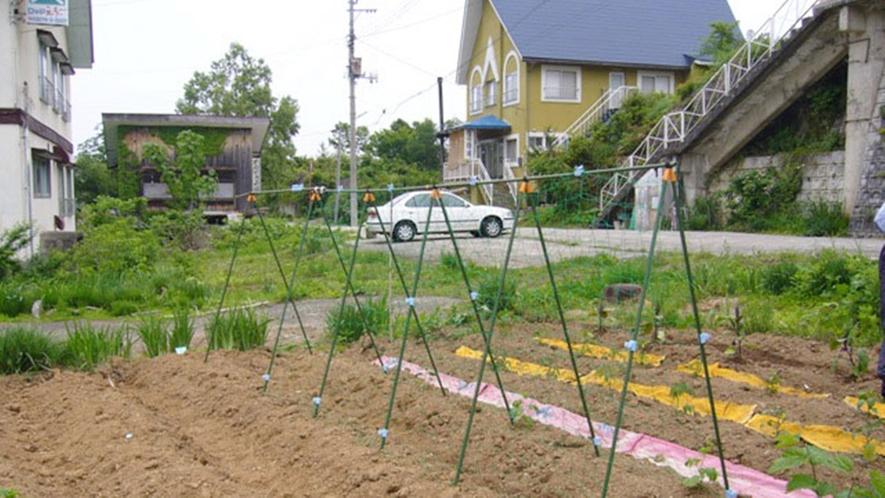 *当館の畑/太陽の恵みいっぱい育った収穫物は栄養満点!