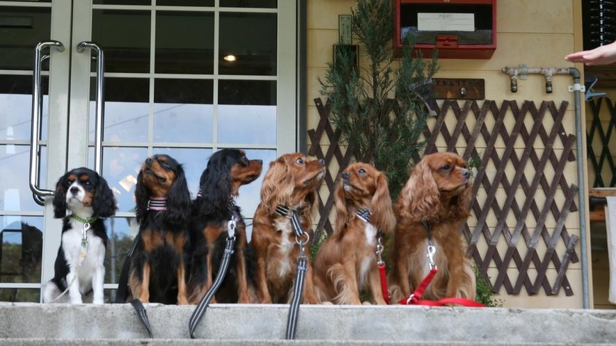 *【看板犬】ぜひ当館へお越しください!看板犬たちもお越しをお待ちしております!