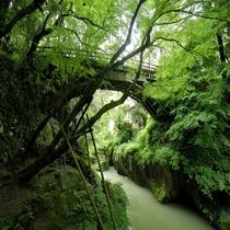 【こおろぎ橋】新緑が美しい