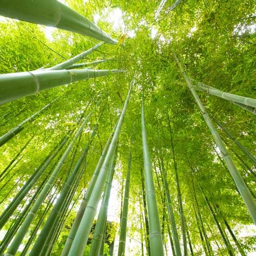 心地よい風を感じる敷地内の竹林