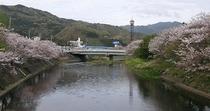 ビラ扇の前の川・桜