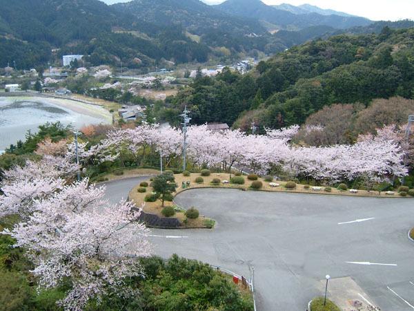 屋上からの桜入り風景