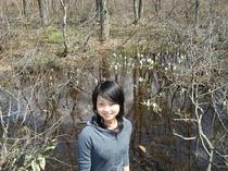 森林植物園の水芭蕉