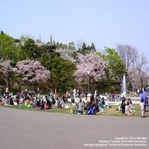 お花見スポット【函館公園】当館より市電で約30分♪