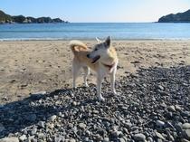 しずちゃんと田井ノ浜